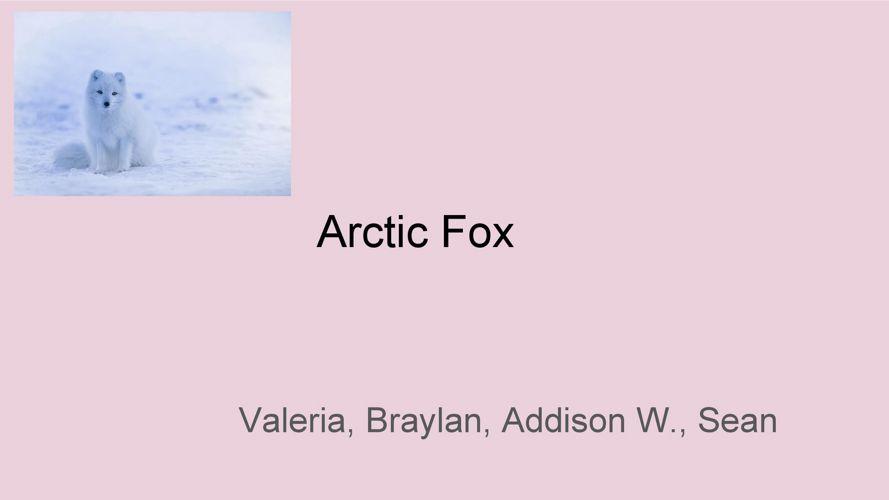 Coates Animal Research - Arctic Fox