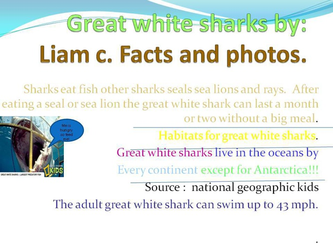 great white sharks by Liam