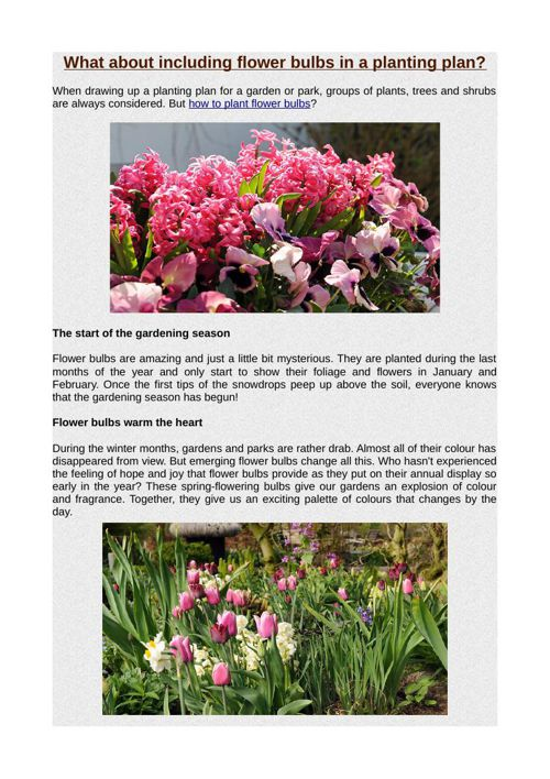 What about including flower bulbs in a planting plan?