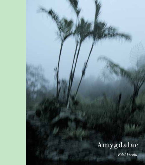 Amygdalae