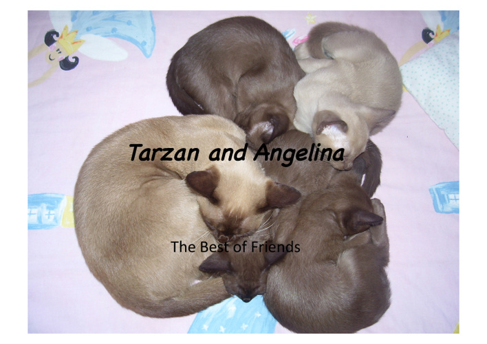 Tarzan and Angelina : A Story of Kindness and Neglection