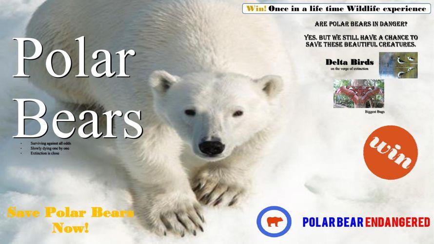 Polar Bears 3