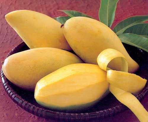 Happy Mango company