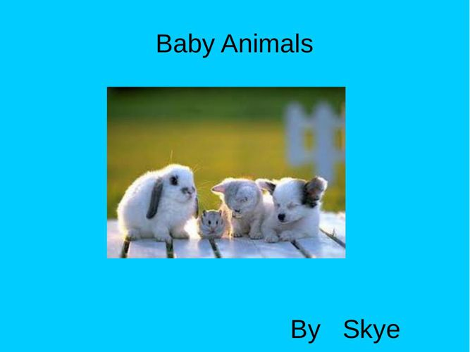 my Geek project is on baby animals
