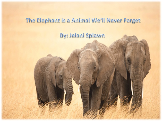 Elephants: The animals We'll never Forget