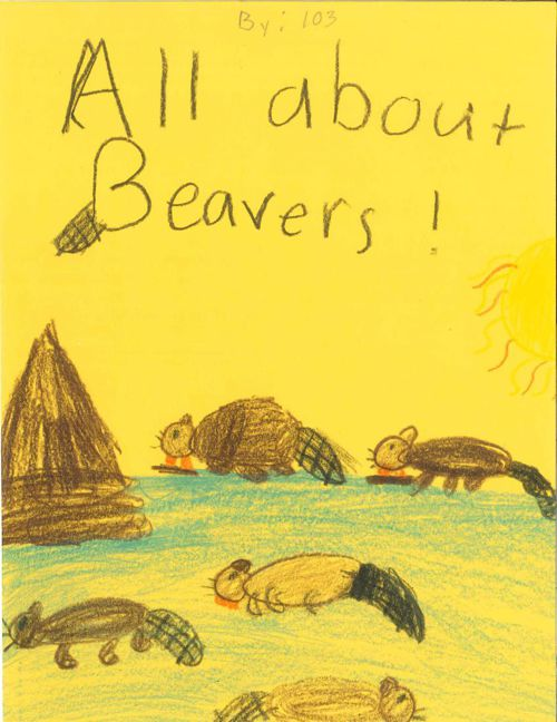 All About Beavers