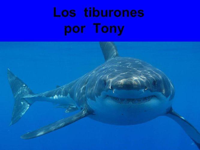 Tony Los tiburones