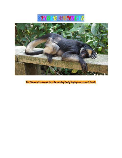 Spider Monkey Book Finall