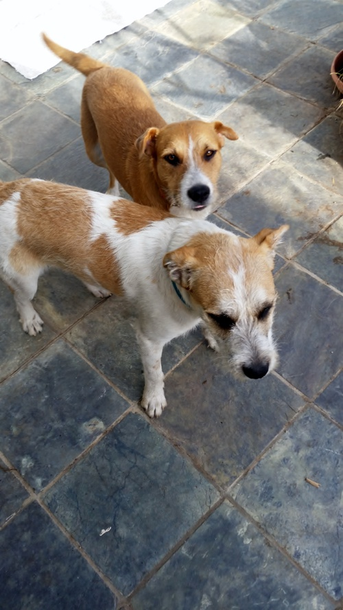 venus and brother need home
