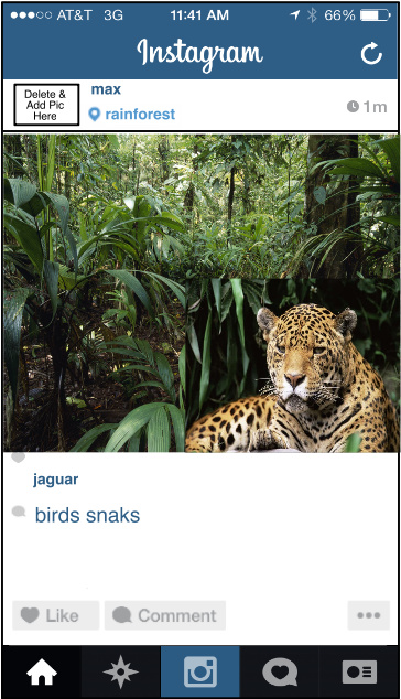 Instagram Animals with Wilhelm