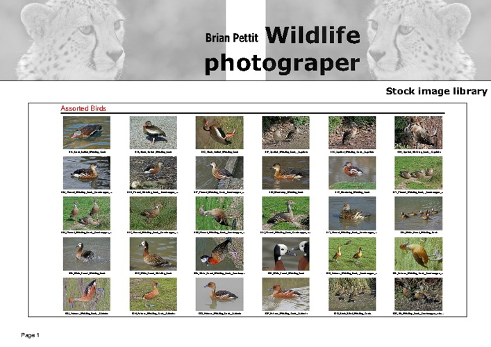 Landscape - Stock images 2 - 4