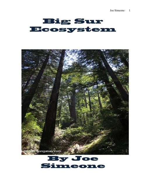 Big Sur Ecosystem Joe Simeone