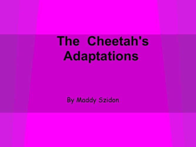 Cheetah's Adaptations
