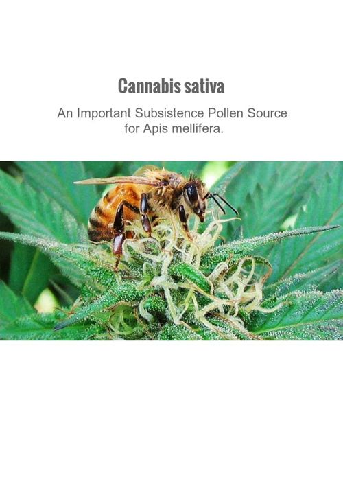 Cannabis sativa-An Important Subsistence Pollen Source for A
