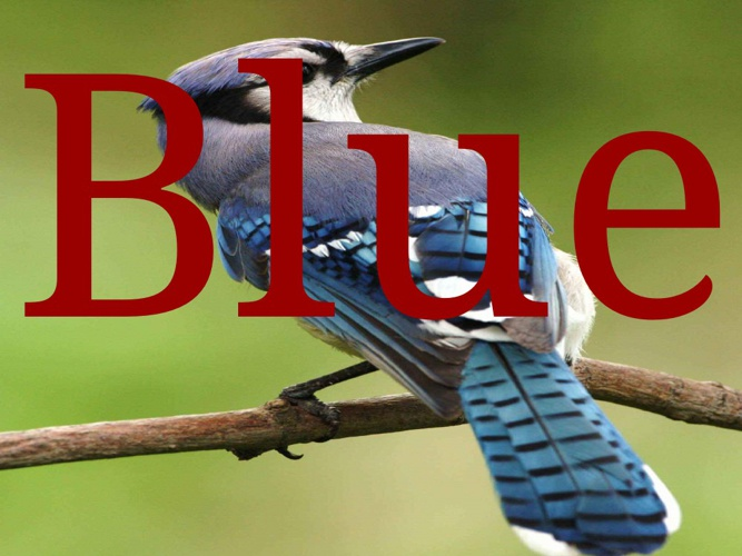 Blue Jay Wendy Garcia
