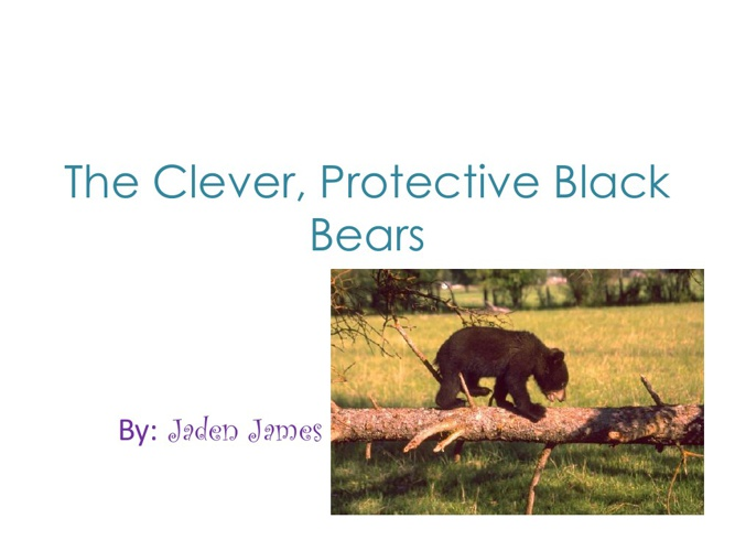 Jaden The Clever, Protective Black Bears