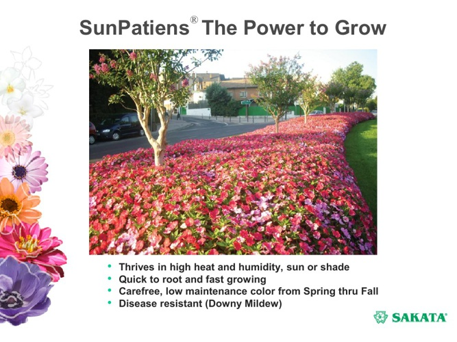 SunPatiens Presentation