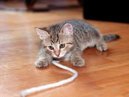 Joue avec ton chat