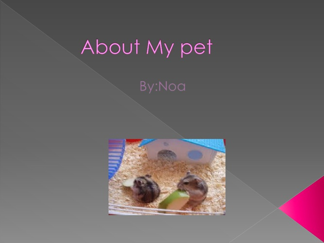 Noa - All about my pet -Bar the hamster