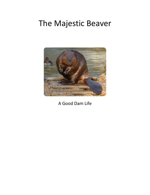 The Majestic Beaver
