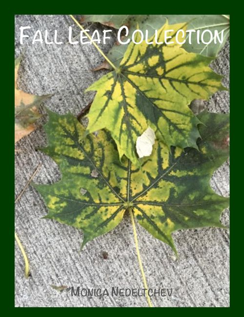 Monica Nedeltchev Fall Leaf Collection