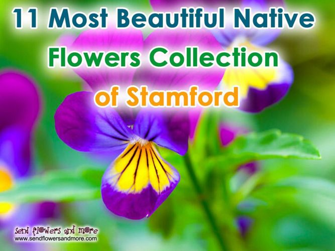 11 Stunning Flowers Collection of Stamford