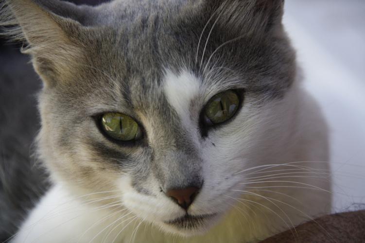 el gato de calamuchita