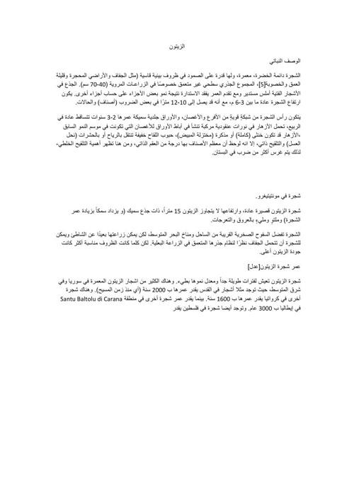 Copy (5) of شجرة الزيتون