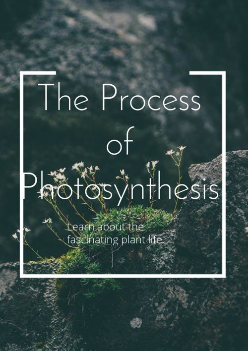 Fascinating Photosynthesis