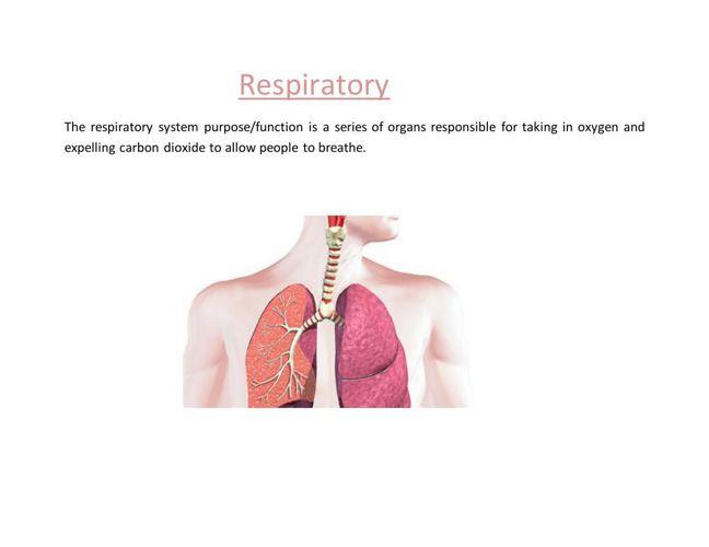 Reyna-Fulcher - Respiratory