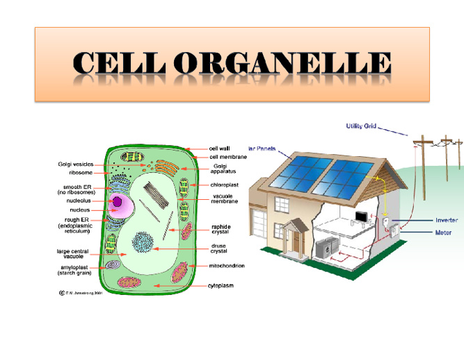 Copy of Cell Organelles By Dinesh