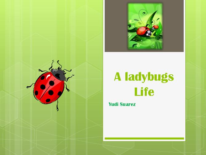 A ladybugs Life