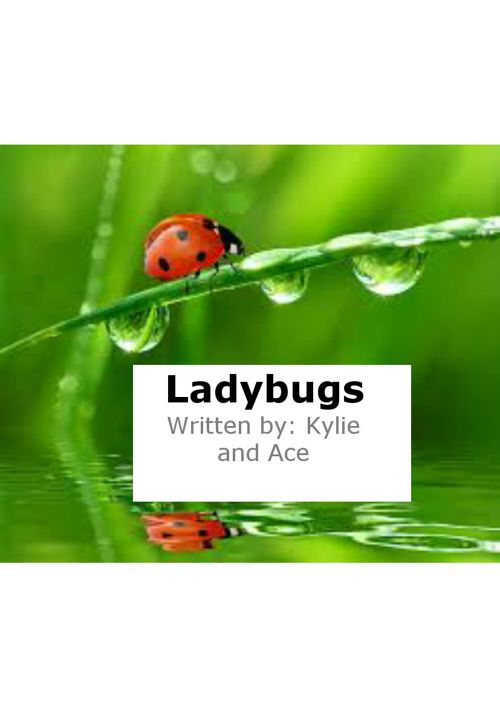 Ladybugs by Kylie and Ace