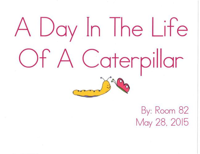 A Day In The Life Of A Caterpillar