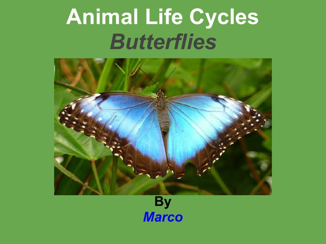 Marco mariposa
