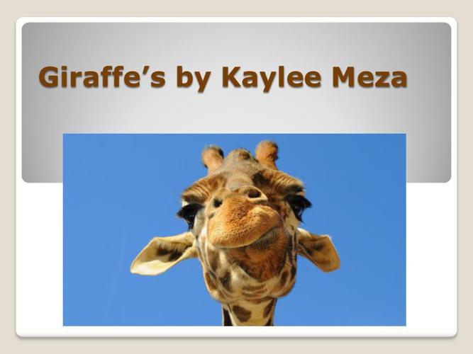 Giraffe's by Kaylee Meza