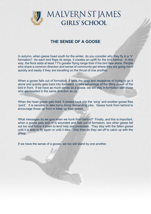 Sense of a Goose