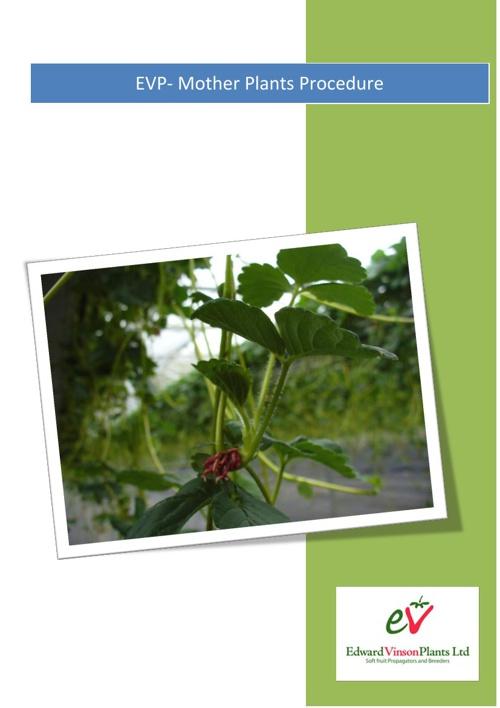EVP Procedures - Mother Plants