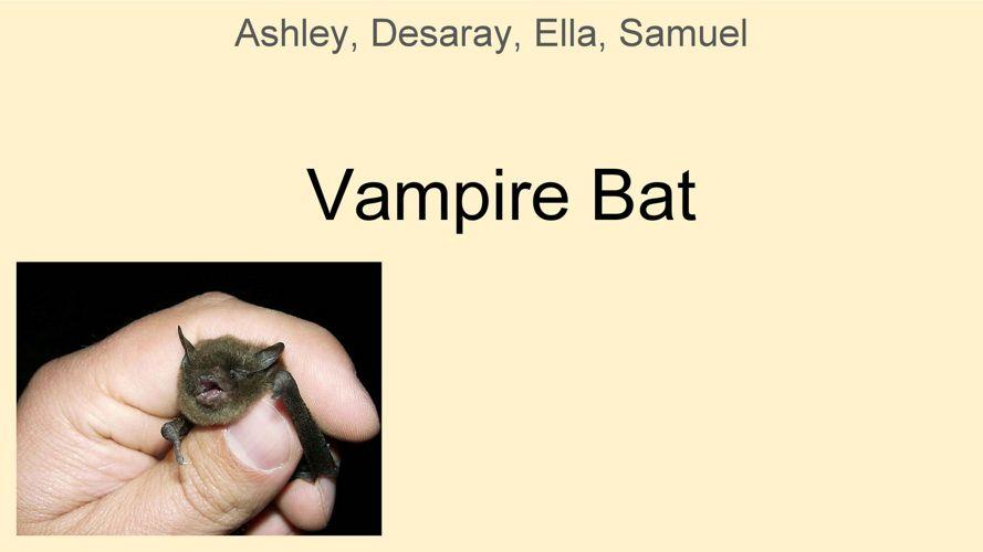 Coates Animal Research - Vampire Bat