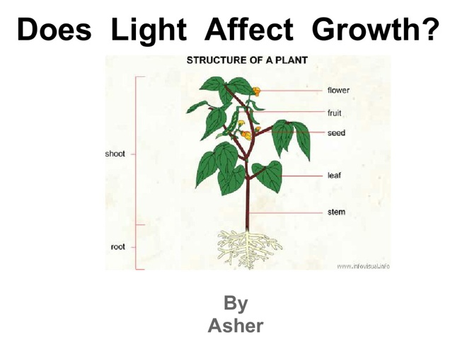 asherplant-1