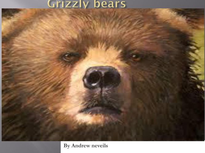 Andrew-Grizzly bears
