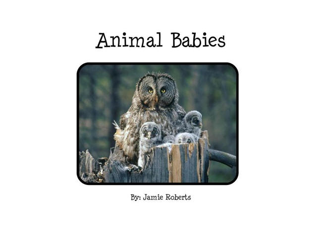 Animal Babies by Jamie