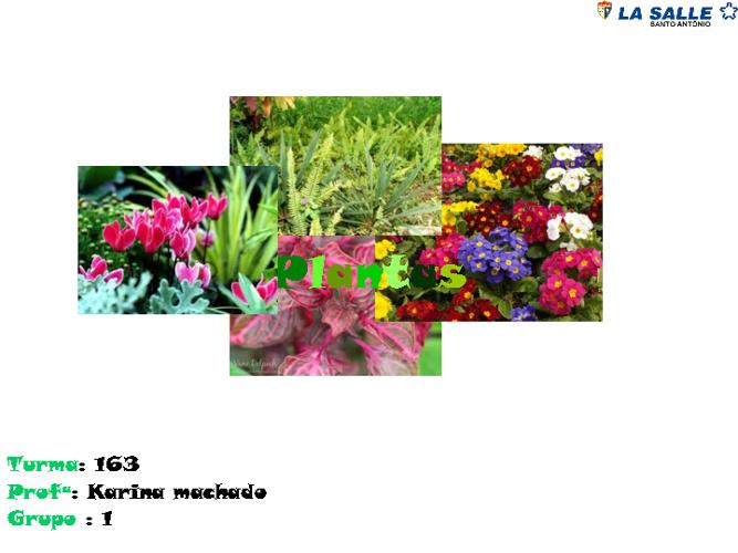 TURMA 163
