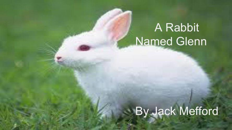 A rabbit named Glenn (1)