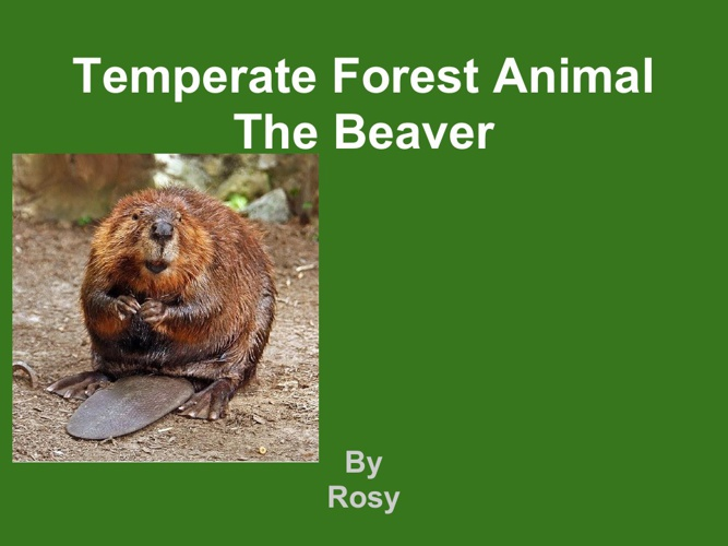 Rosy beaver
