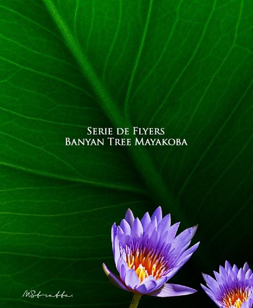 SERIE FLYERS BILINGUES BANYAN TREE MAYAKOBA 2012