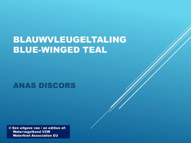 Blauwvleugeltaling - Blue-winged teal