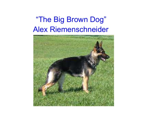 """The Big Brown Dog"""