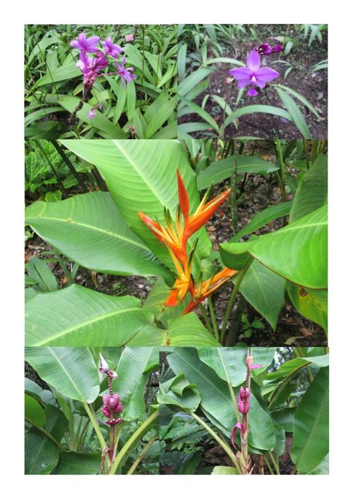 Matinina et ses fleurs