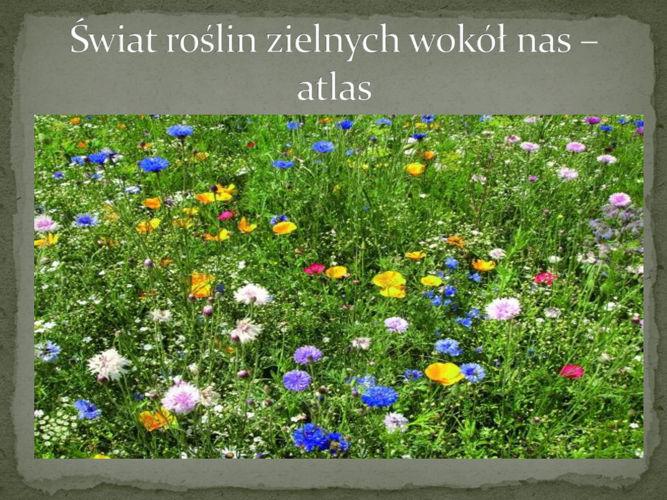 Świat roślin zielnych wokół nas – atlas 2